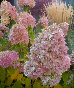 Hydrangea fowers are so beautiful and romantic.  They grace our home entrance.